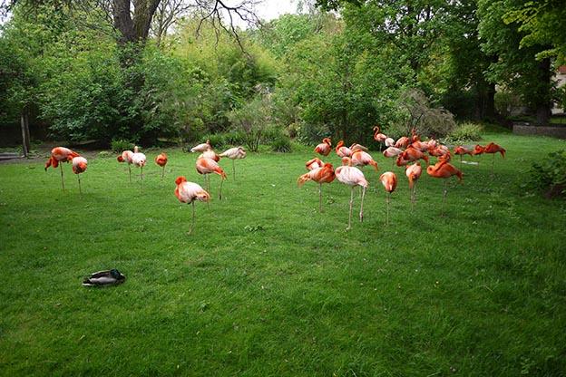 Ménagerie jardin des plantes Paris